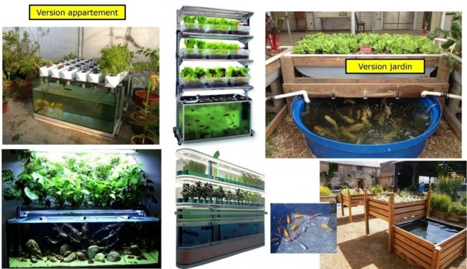 Aquaponie domestique - Aquaponic Management Project