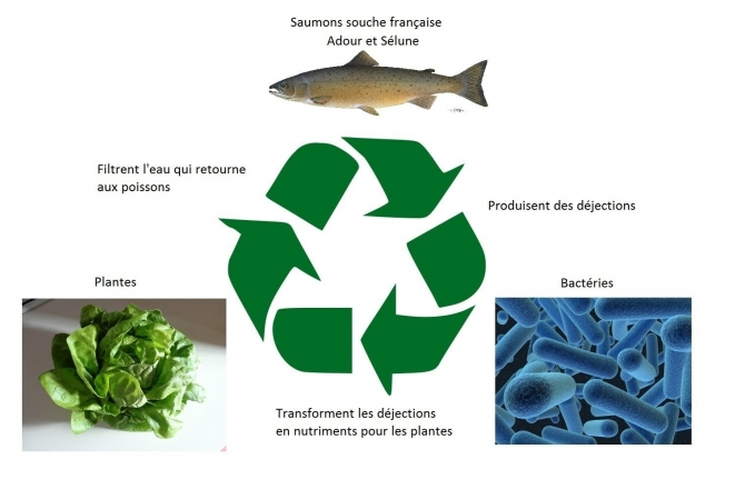 L'Aquaponie - Aquaponic Management Project